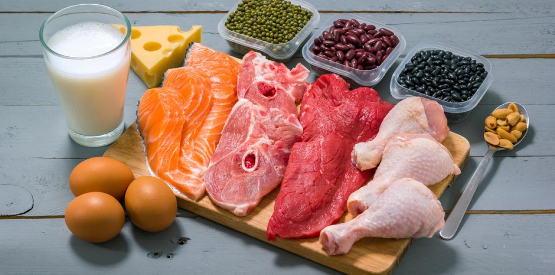 A quoi servent les protéines