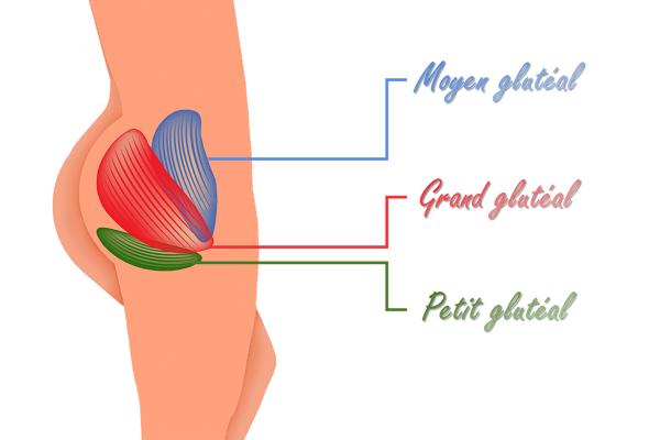 muscles à cibler pour savoir comment grossir des fesses rapidement